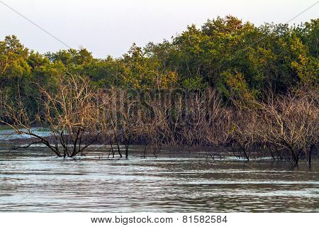 Colors of Sundarbans