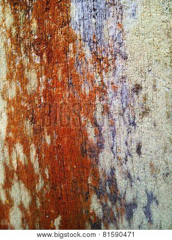 Rare Texture