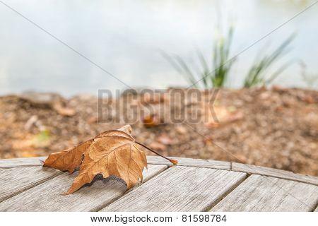 Dry leaf in Autumn