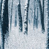 stock photo of blanket snow  - first winter snow covered trees and plants in the park - JPG
