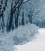 picture of blanket snow  - first winter snow covered trees and plants in the park - JPG