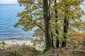 pic of polonia  - Autumnal trees on Kepa Redlowska cliff - JPG