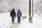 foto of dog-walker  - Two men and two dogs walking on snowy blizzard - JPG