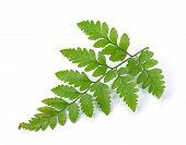 stock photo of fern  - Green fern leaf isolated on a  white - JPG