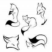 foto of sneaky  - Set of foxes in curve lines - JPG