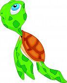 pic of terrapin turtle  - vector illustration of cute sea turtle cartoon - JPG