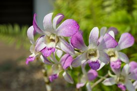 stock photo of epiphyte  - Orchids occur worldwide, especially as epiphytes in tropical forests, 