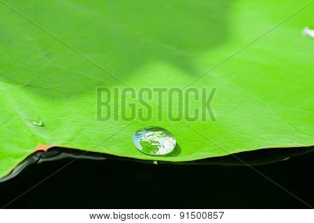 Water Drop On Fresh Green Lotus Leaf Background