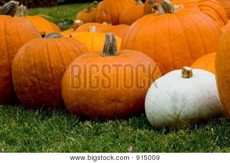 Autumn Decoration - Pumpkin Patch