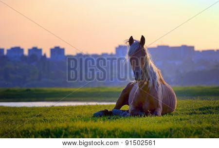 Horse Sitting In Sunset