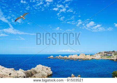 Seagull Flying Over Costa Paradiso