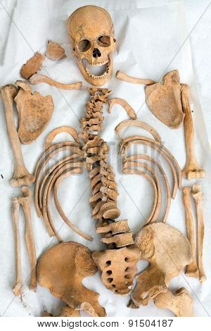 Demonstration Of Archeological Find Old Human Skeleton
