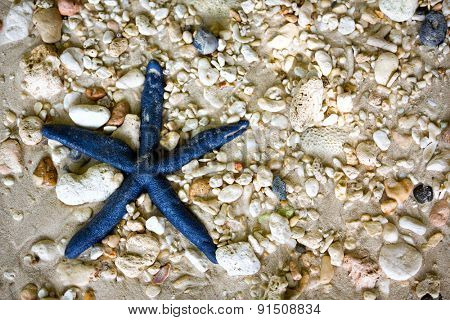 Blue starfish in the sea, Philippines