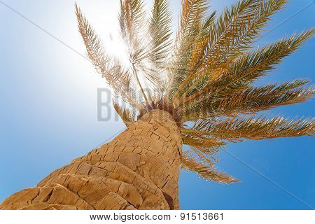 Green Palm Tree On Blue Sky