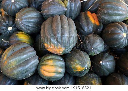 Ripe Harvested Acorn Squash