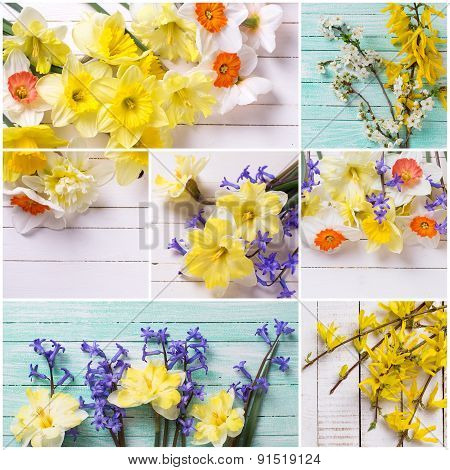 Collage From  Photos With  Colorful Flowers