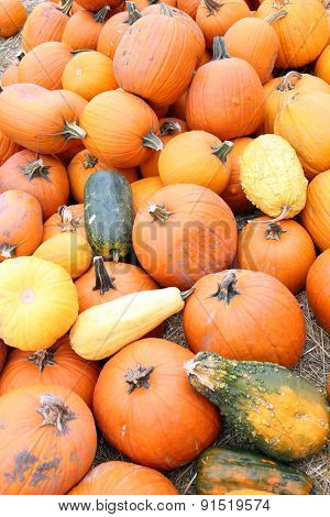 Giant Bumpy Gourd And Pumpkin