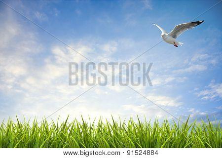 Field Of Grass Under Sky And Flying Bird