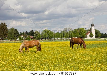Grazing Horses In Buttercup Meadow, Church Building