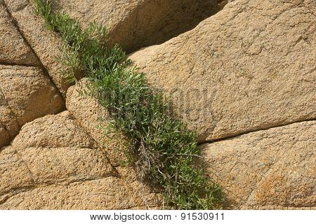rocks and grass 2
