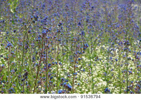 wildflowers 12