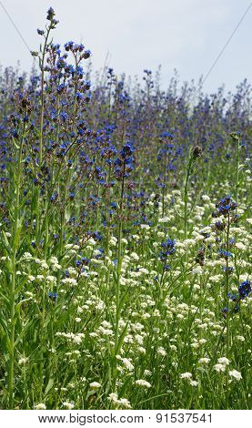 wildflowers 13