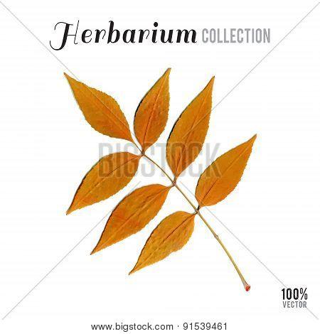 herbarium collection leaf