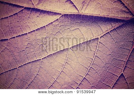 Vintage Toned Leaf Close Up.