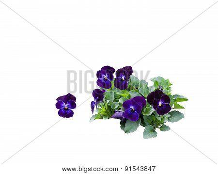 Pansy bouquet arrangement