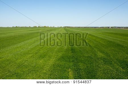 Lush Green Grass With Blue Sky Background
