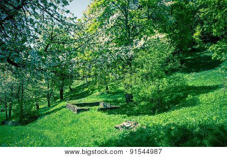 Garden With Trees