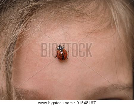 Closeup Of Ladybird Bug On Forehead Walking Towards Hair