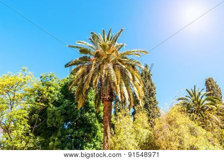 Palms Under The Sun Plants Foliage