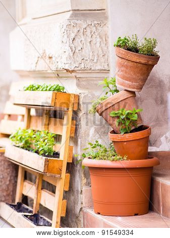 Mini gardening - several pots with plants stacked