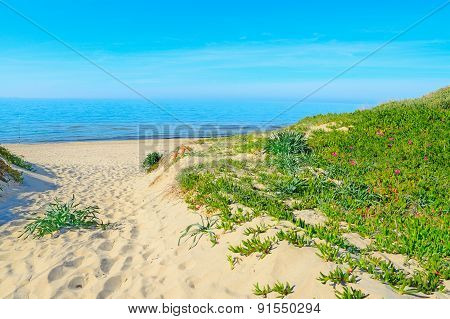 Plants And White Sand In Rena Majore Beach
