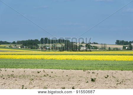 Ecological Polish Landscape
