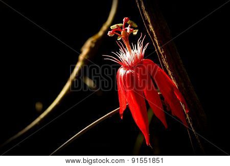Close up shot of red flower from amazon rainforest, Ecuador