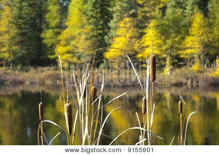 Bog Pond In Autumn