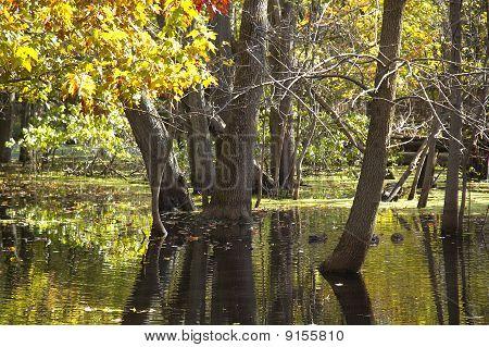 Bog Reflections