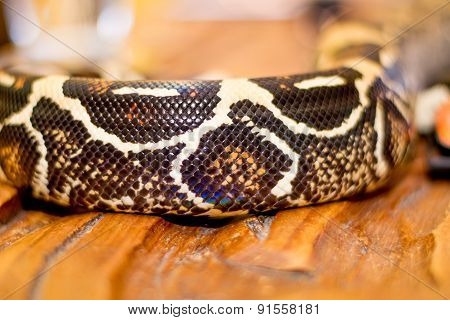 Close Up Of A Snake