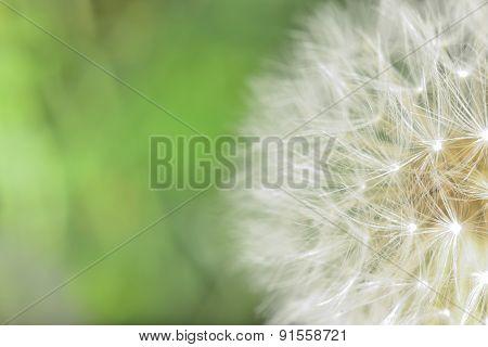 Macro Blowball