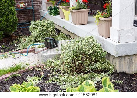 Hedge Trimmer Being Used To Trim Foliage Plants