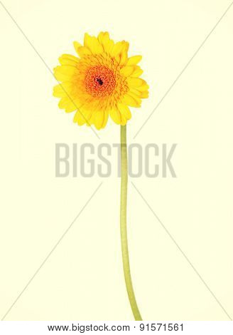 Yellow nature flower on a stem