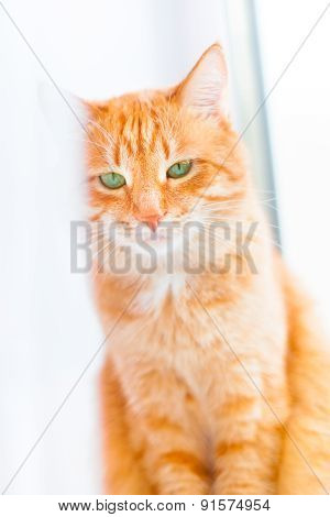 Ginger Shorthair Cat With Sad Green Eyes Sitting On Window. Red Cat With Bright Green Eyes