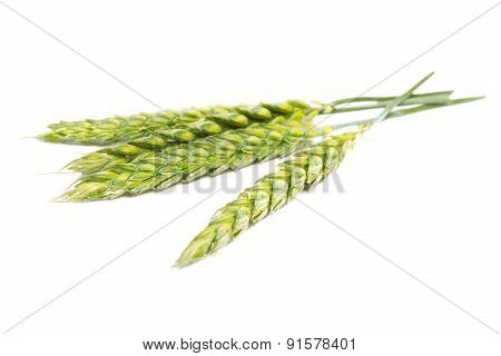 Green wheat ears,Isolated on white