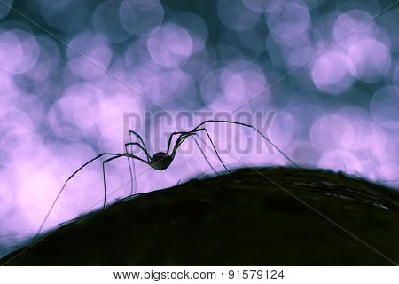 silhouette of a spider on black and blue background bokeh