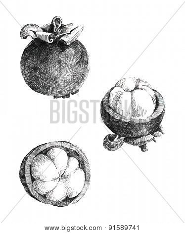 Hand drawn mangosteen isolated on white background