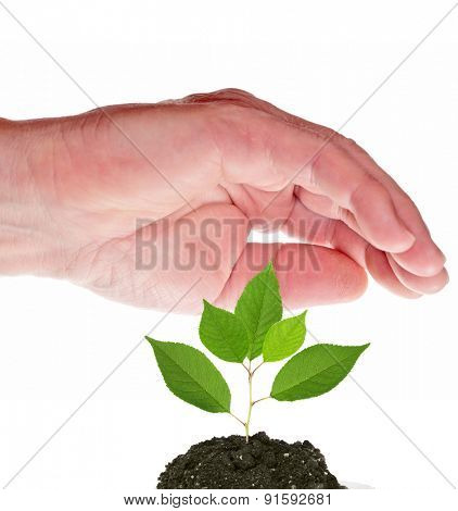 human hand above small plant isolated on white background