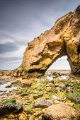 image of tide  - Saddle Rocks at Cullercoats Whitley Bay here at low tide showing the seaweed and rocks - JPG