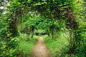 picture of garden eden  - Walkway Lane Path With Green Trees And Bushes In Garden - JPG